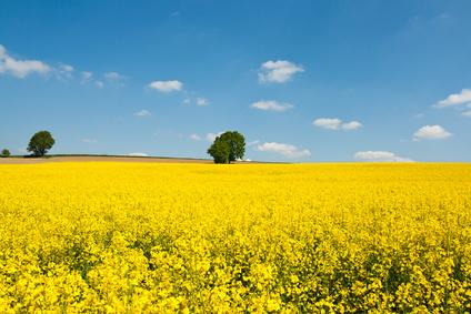 Die Zukunft der Biokraftstoffe